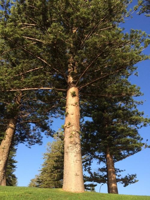 パースの木